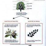 Muestreo para análisis foliar en árboles frutales.